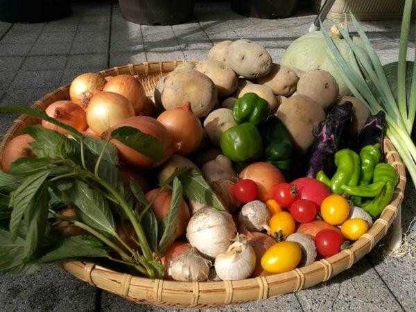 アマナ保育園は無農薬野菜を給食提供します