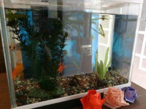 保育園で飼っている金魚